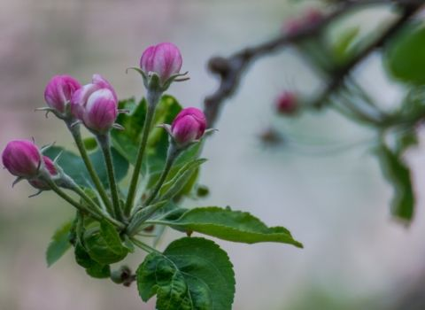 proljece-biourtika